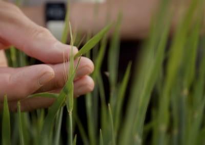 Biotalouden Uudet Tuulet hankevideo