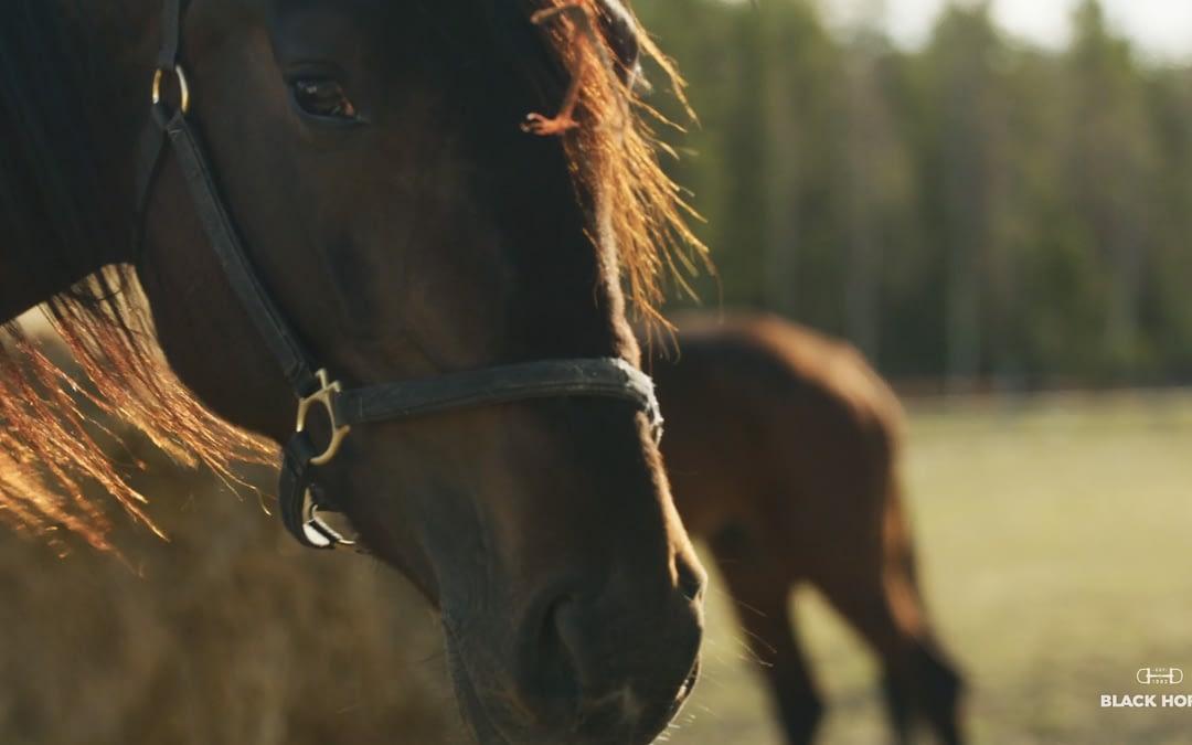 Biofarm – Tallien Sankarit